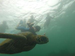 Emile Turtle
